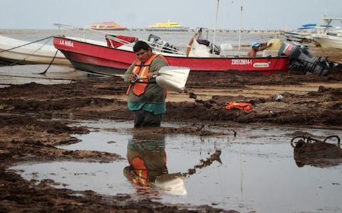 A worker cleans the sargassum from El Recodo beach, mainly used by fishermen, affected by the algae, in Cancun, Mexico - Credit: Rex