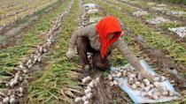 The garlic case that foreshadowed the US-China trade war