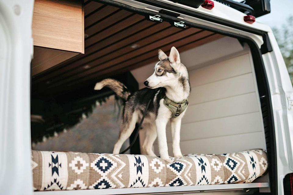 husky puppy on a van life adventure in the back of the vehicle standing on a mattress