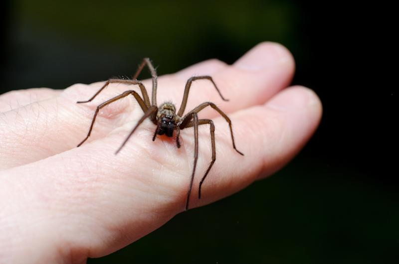 Big scary spider on hand