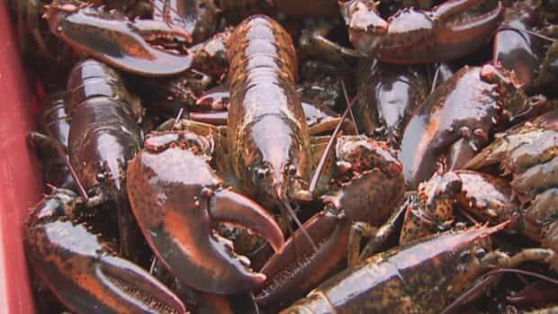 Nautical Seafoods of Annapolis County sells lobster and scallops.
