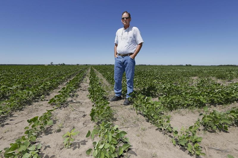 In this Friday, June 28, 2013 photo, Jim Carlson stands in his field of soy beans in Silver Creek, north of Osceola, Neb. The route of the proposed Keystone XL pipeline runs through this field. Carlson supports turning to county officials and zoning boards to approve resolutions formally opposing the pipeline, in hopes of a symbolic win to show the federal government that the project has local opposition. (AP Photo/Nati Harnik)