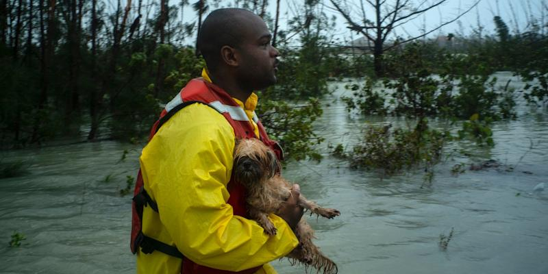 A volunteer looks for the owner of a dog he rescued from the rising waters of Hurricane Dorian,