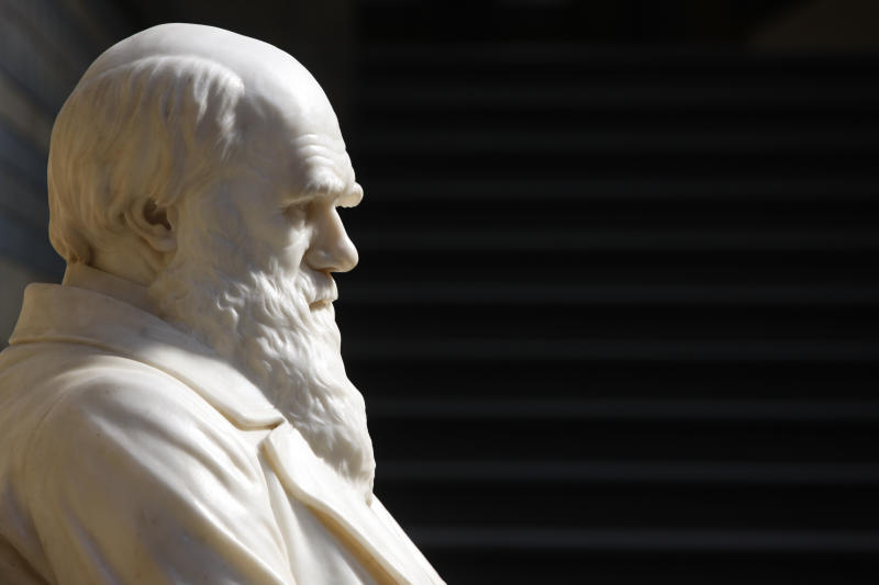 Detail of statue of Charles Darwin in Natural History Museum