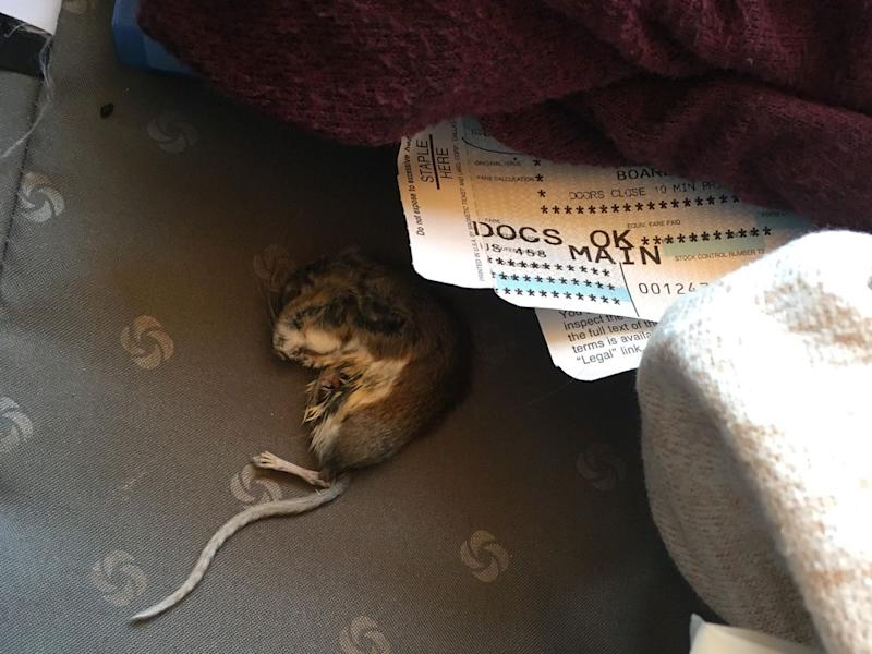american airlines dead rat in luggage
