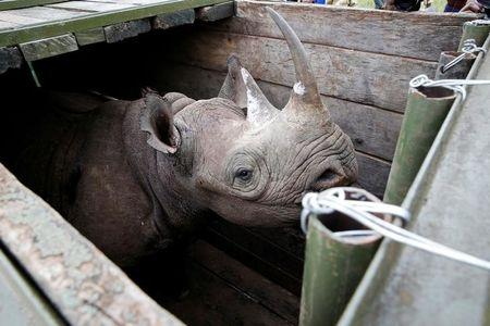 Conservationists call for investigations into the deaths of seven rhinos