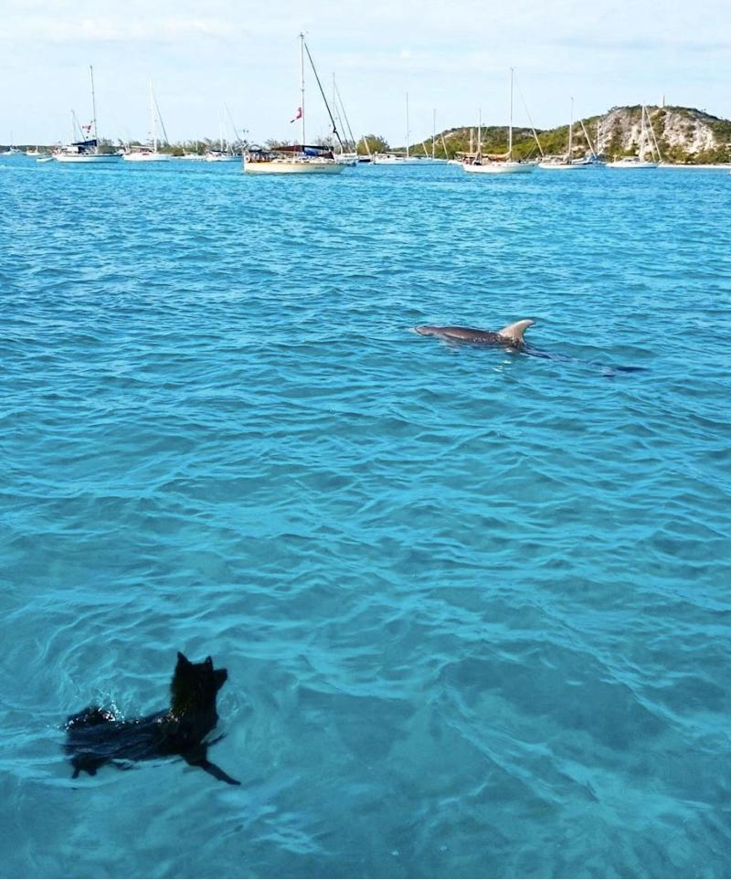 The two unlikely friends can be seen frolicking together in the Bahamas. Photo: Instagram
