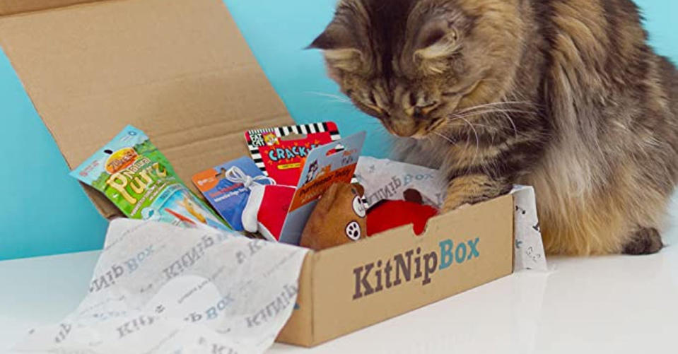 KitNipBox's Happy Cat box is $7 off today. (Photo: Amazon)