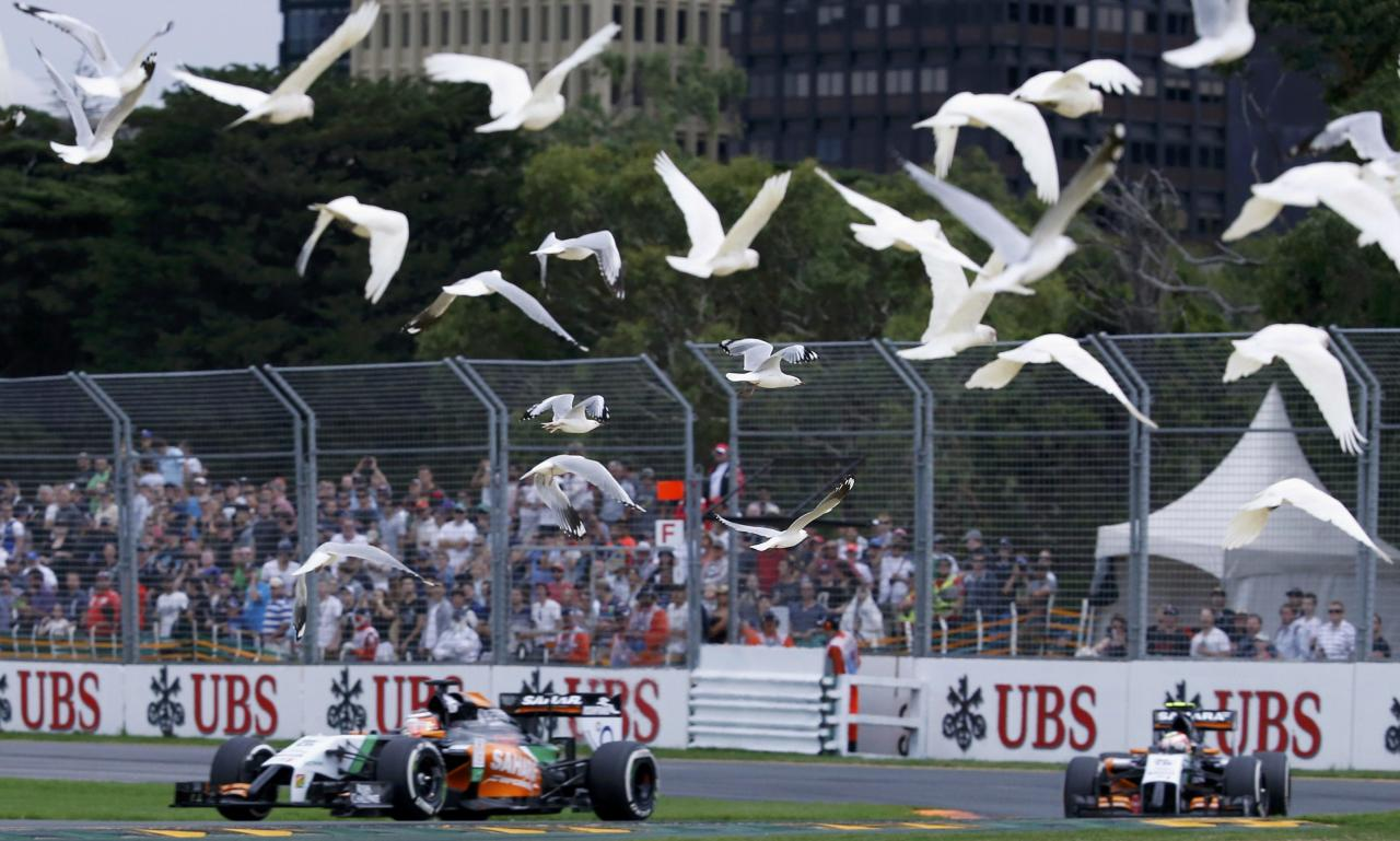 A flock of bird flies above Force India Formula One cars during the qualifying session for the Australian F1 Grand Prix at the Albert Park circuit in Melbourne March 15, 2014. REUTERS/Jason Reed (AUSTRALIA - Tags: SPORT MOTORSPORT F1 ANIMALS)