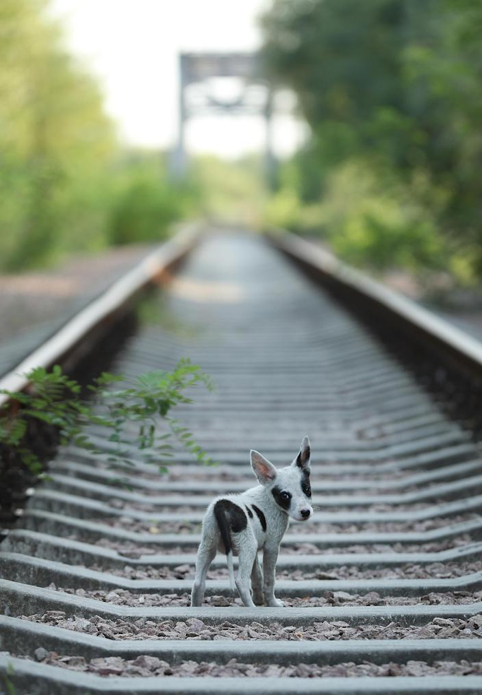 <p>A stray puppy walks along abandoned train tracks near the Chernobyl nuclear power plant on Aug. 19, 2017, near Chernobyl, Ukraine. (Photo: Sean Gallup/Getty Images) </p>