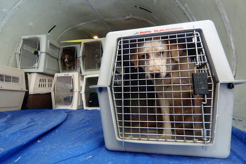 United bans several dog, cat breeds and all other animals from flights