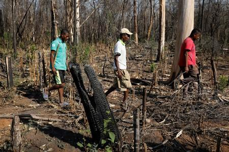 Nestor Ramakarison leads a team of forest rangers through burned trees at the Kirindy forest reserve near the city of Morondava