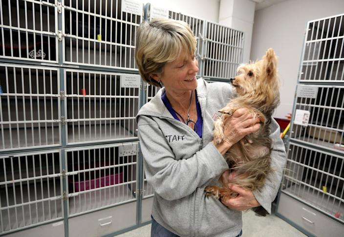 Dana Rocco, manager at the Humane Society of Westchester in New Rochelle, New York, plays with a dog up for adoption on March 26, 2020. Most of the animals at the shelter were adopted or fostered since the coronavirus pandemic began.