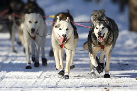 A dog team competes in the ceremonial start to the Iditarod dog sled race in Anchorage