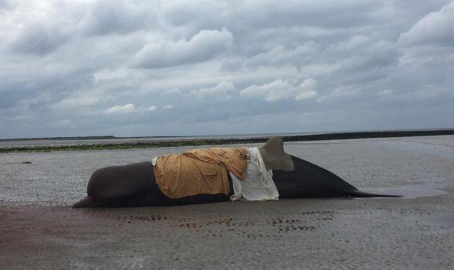 Whales die after washing up on beach in 'largest live stranding in Ireland's history'