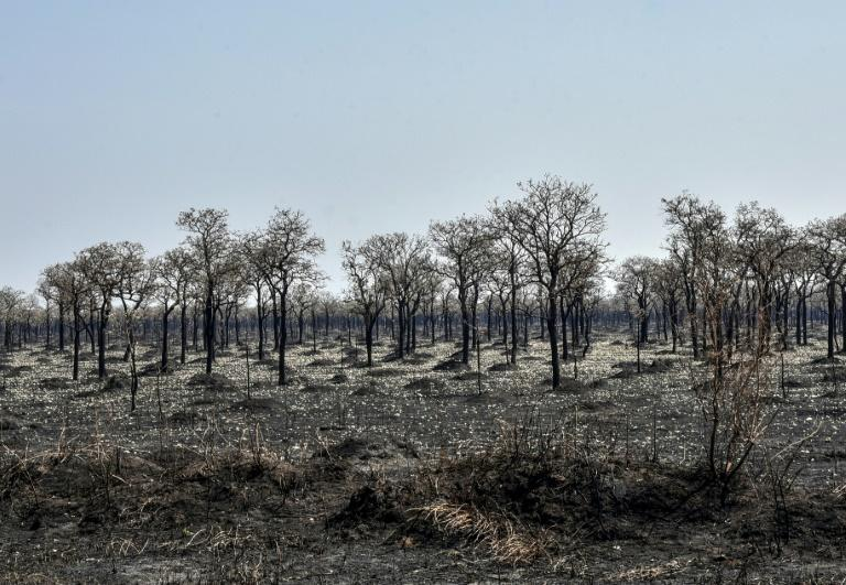 Bolivia saw the third highest level of forest destruction in 2020