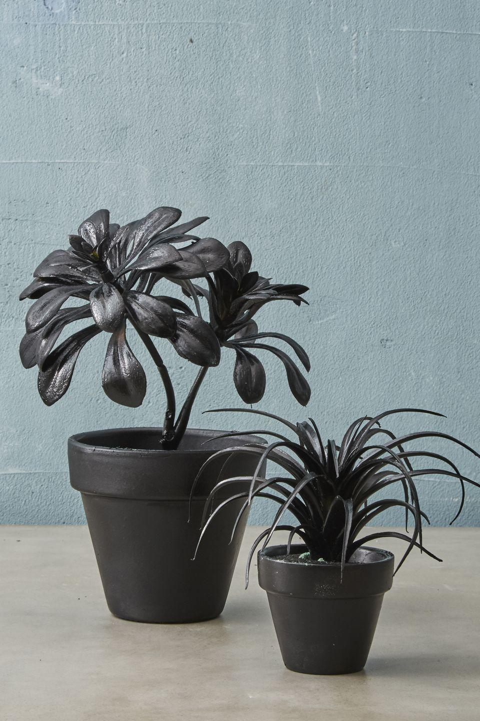"""<p>Apply <span class=""""redactor-unlink"""">black spray paint</span> liberally to a <span class=""""redactor-unlink"""">faux plant for a touch of eeriness.</span> Then stick it in a black pot with dark-colored sand. </p><p><a class=""""link rapid-noclick-resp"""" href=""""https://www.amazon.com/Velener-Potted-Plastic-Bamboo-Leaves/dp/B0768XP26K/?tag=syn-yahoo-20&ascsubtag=%5Bartid%7C10055.g.421%5Bsrc%7Cyahoo-us"""" rel=""""nofollow noopener"""" target=""""_blank"""" data-ylk=""""slk:SHOP FAKE PLANTS"""">SHOP FAKE PLANTS</a></p>"""