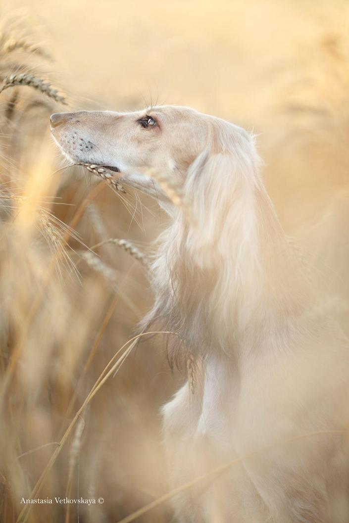<p>It's easy to see just why this captivating image won first prize in the portrait category of the competition. </p>