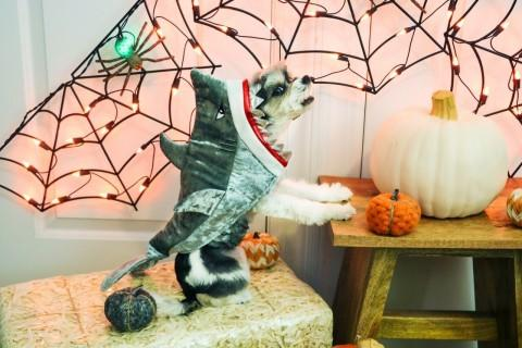 PetSmart® Celebrates Halloween with Pet Costumes, Toys and
