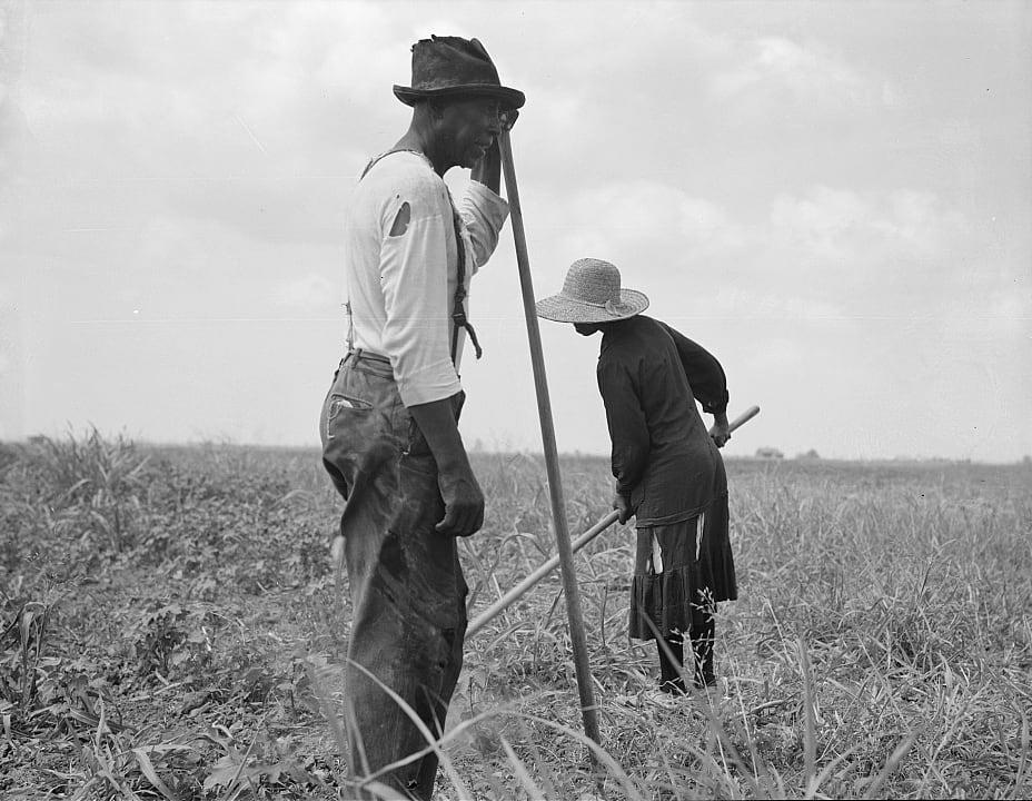 Cotton sharecroppers in Greene County, Ga., June 1937. (Dorothea Lange / Library of Congress)