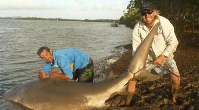Monster sharks are being caught in Gold Coast waters. Source: Mad Fins Fishing