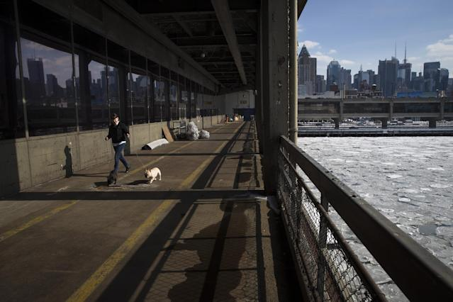 A French Bulldog runs along Pier 92 as competitions continue inside during the Westminster Kennel Club dog show, Monday, Feb. 10, 2014, in New York. (AP Photo/John Minchillo)