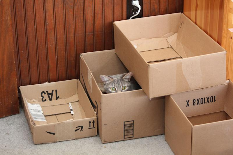 A cat enjoys a box fort. (Susan C. Willett / Life with Dogs and Cats)