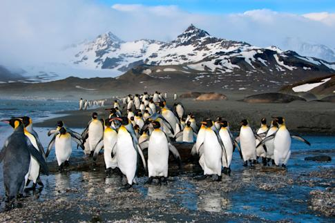 The growing number of tourists to Antarctica has raised concerns about the environmental impact of mass tourism in the region. Photo: Alamy