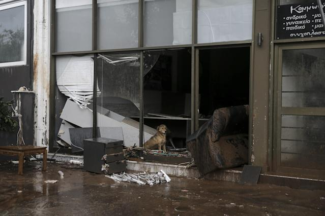 <p>A dog is seen at the damaged store after torrential rains struck the west Athenian suburb of Mandra, Greece on Nov. 16, 2017. (Photo: Ayhan Mehmet/Anadolu Agency/Getty Images) </p>