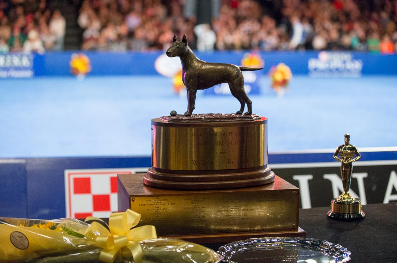 Purina National Dog Show 2020.National Dog Show 2019 On Thanksgiving How To Watch Start