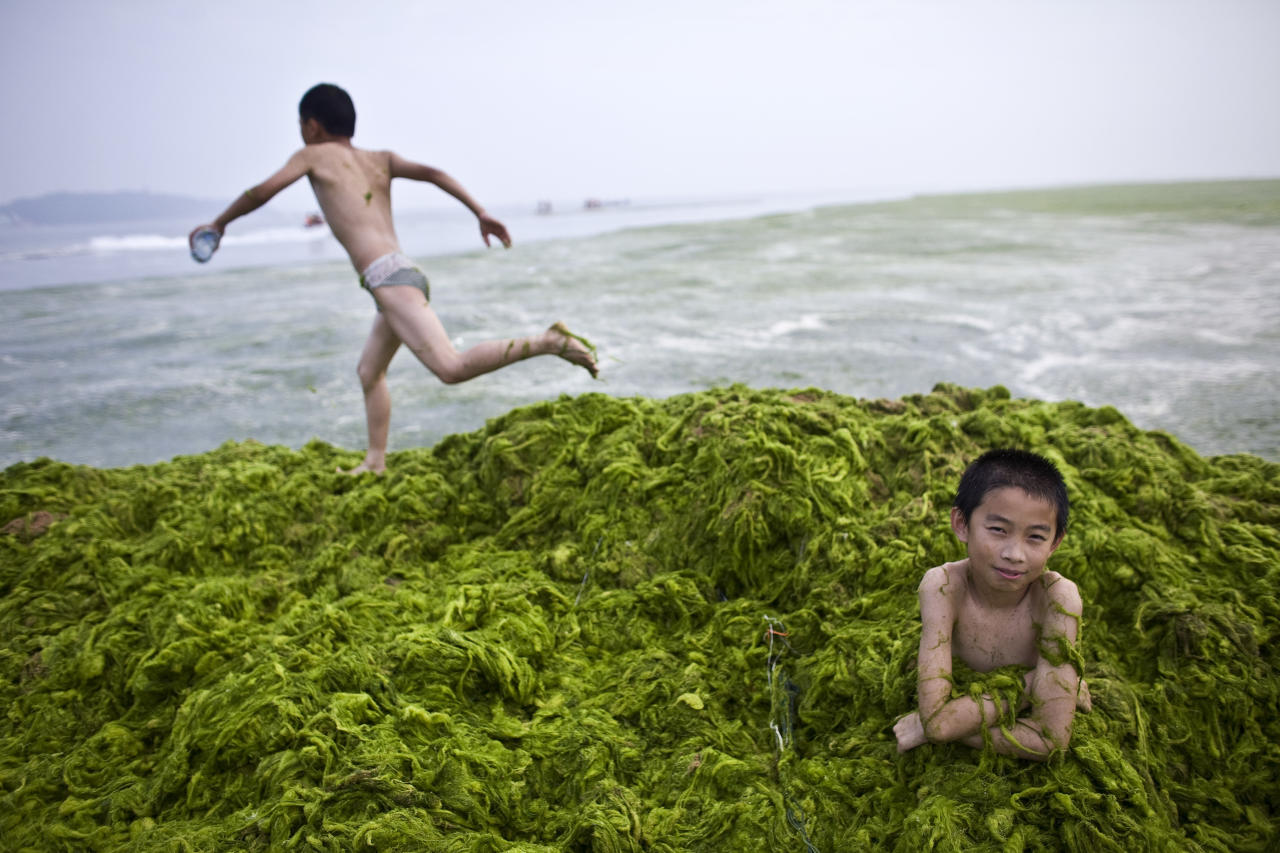 A local boy sits in a pile of algae as his friend runs on top of it at a beach in Qingdao, Shandong province July 6, 2008. China's resort city and venue for the Olympic sailing is on a war footing, with thousands of troops and common volunteers battling to clean the city's biggest ever algae bloom before the Games.  REUTERS/Nir Elias