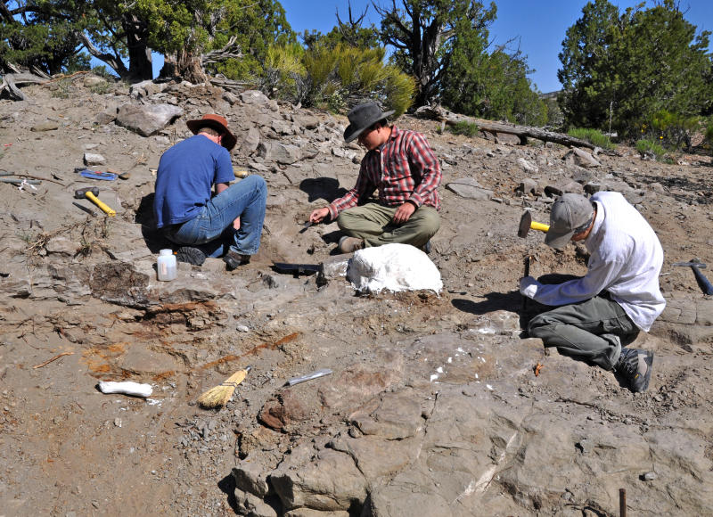 History Museum of Utah shows field crew members excavating the tail club of an ankylosaur a squat plant-eater that was covered in bony armor from its spiky head to its clubbed tail in the Grand Staircase Escalante Nation