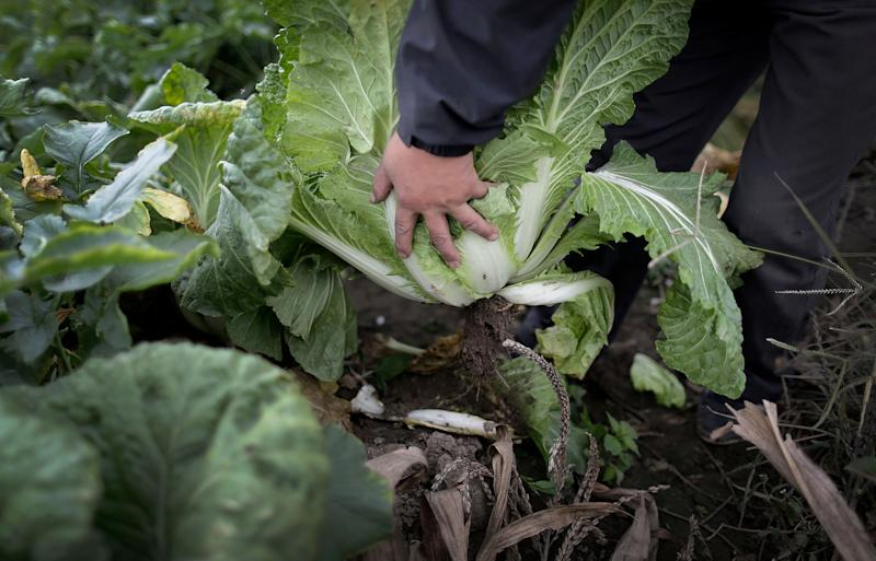 North Korea faces food crisis after poor harvest, UN says