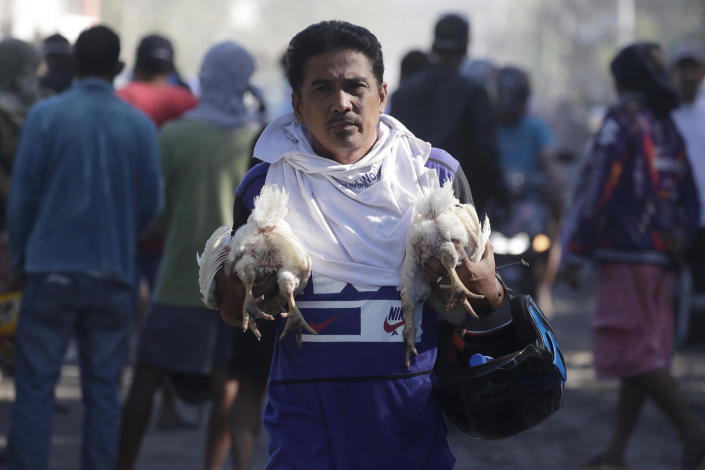 A man carries chickens as authorities enforced total evacuation of residents living near Taal volcano in Agoncillo town, Batangas province, southern Philippines on Thursday Jan. 16, 2020. Taal volcano belched smaller plumes of ash Thursday but shuddered continuously with earthquakes and cracked roads in nearby towns, which were blockaded by police due to fears of a bigger eruption. (AP Photo/Aaron Favila)