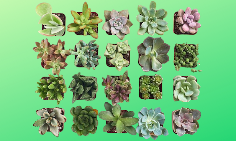 So many succulents, so little time... . (Photo: Amazon)