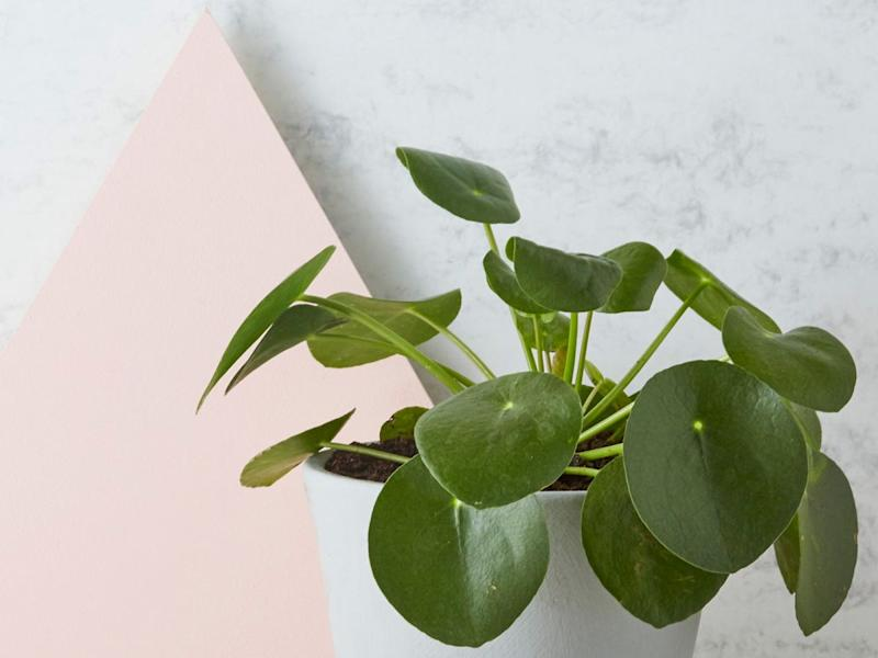 bb01e7a77 These Are The Best Places To Buy Plants Online