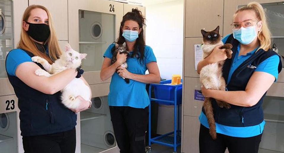 The Lost Dogs' Home volunteers hold up cats that need to be adopted urgently
