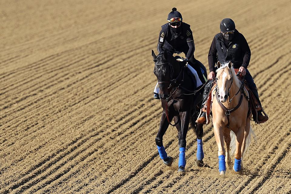 BALTIMORE, MARYLAND - MAY 11: Kentucky Derby winner Medina Spirit (L) is walked over the track during a training session for the upcoming Preakness Stakes at Pimlico Race Course on May 11, 2021 in Baltimore, Maryland. (Photo by Rob Carr/Getty Images)