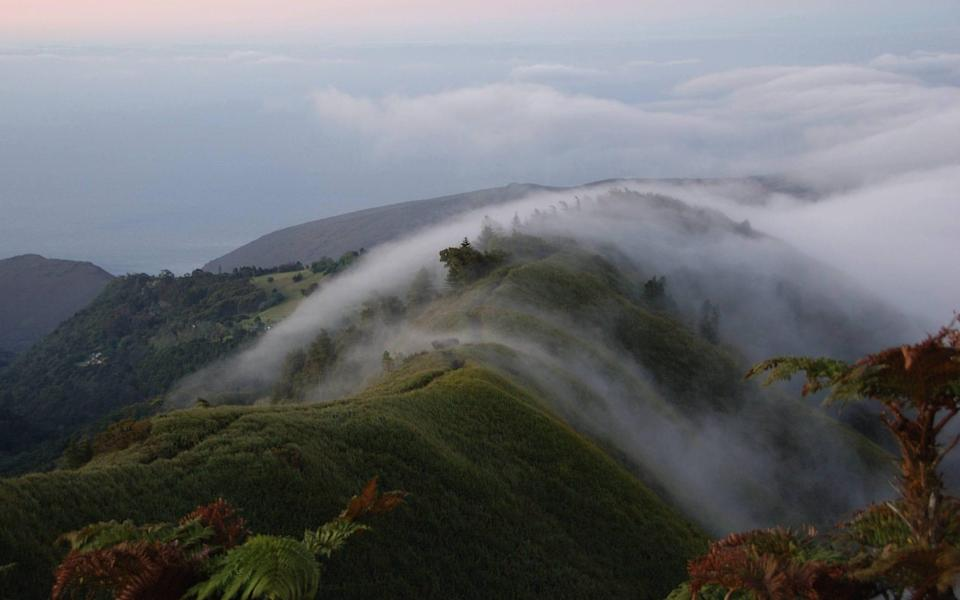 The sole natural cloud forest remaining on British soil is on St Helena, which was colonised in the 17th century