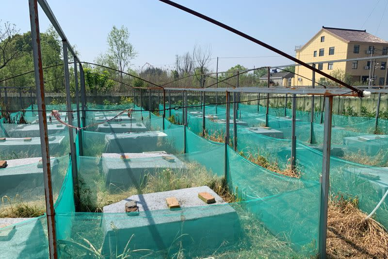 Snake farm with empty wooden slats is pictured in Zisiqiao village