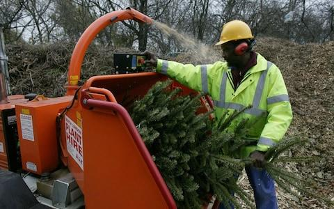 Take your tree to be recycled - Credit: Philip Hollis