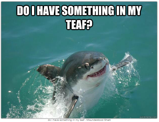 """<div class=""""caption-credit""""> Photo by: QuickMeme.com</div><b>Do I Have Something In My Teaf?</b> <br> Maybe the shark isn't coming up to attack you, but he didn't have a mirror to check his teeth. <br> <a rel=""""nofollow noopener"""" href=""""http://www.babble.com/pets/15-animals-master-the-art-of-taking-a-selfie-photo/?cmp=ELP