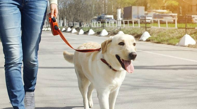 dogs, benefits of growing up with dogs, dogs schizophrenia, benefits of keeping dogs, indian express, indian express news