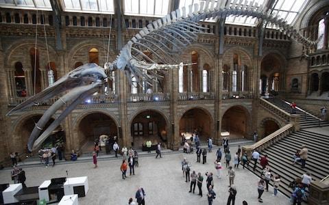 The skeleton of a blue whale displayed at the Natural History Museum - Credit: PA
