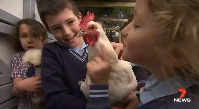 The chickens had become an integral part of school life for the young students. Source: 7 News