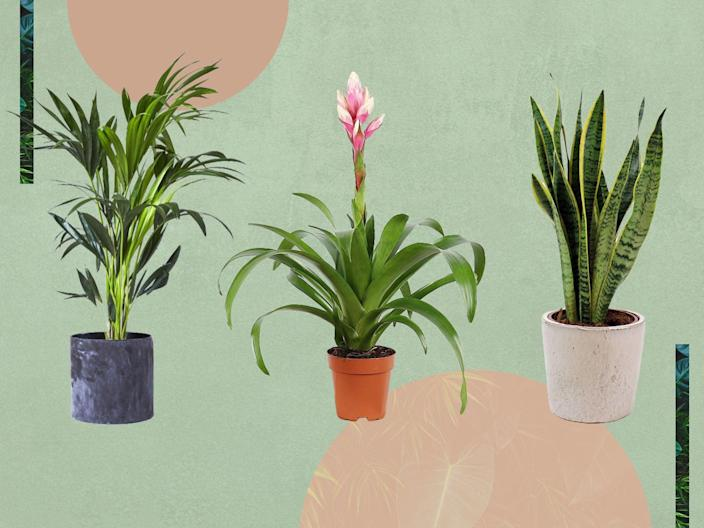 <p>They can absorb pollutants in the air, and even reduce both physiological and psychological stress</p> (iStock/The Independent )