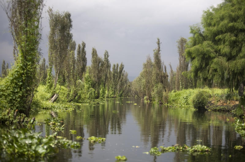 """FILE - This Oct. 8, 2008 file photo shows a canal in Xochimilco Lake in Mexico City. The salamander-like axolotl, also known as the """"water monster"""" and the """"Mexican walking fish,""""may have disappeared from its only known natural habitat, Lake Xochimilco. Biologist Luis Zambrano of Mexico's National Autonomous University said Tuesday, Jan. 28, 2014, the most recent three-month attempt to net axolotls found not one of the creatures. (AP Photo/Dario Lopez-Mills, File)"""