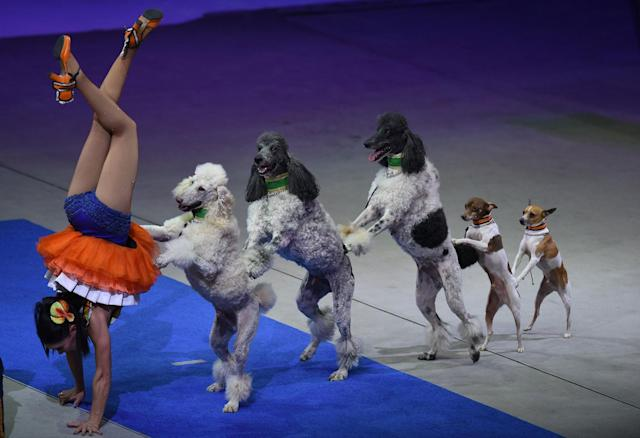 "<p>Performers from the Ringling Bros. and Barnum & Bailey Circus stage their final farewell presentation on May 21, 2017 at the Nassau Veterans Memorial Coliseum in Uniondale, New York, the circus that has entertained crowds for 146 years with its ""Greatest Show on Earth"". (Timothy A. Clary/AFP/Getty Images) </p>"