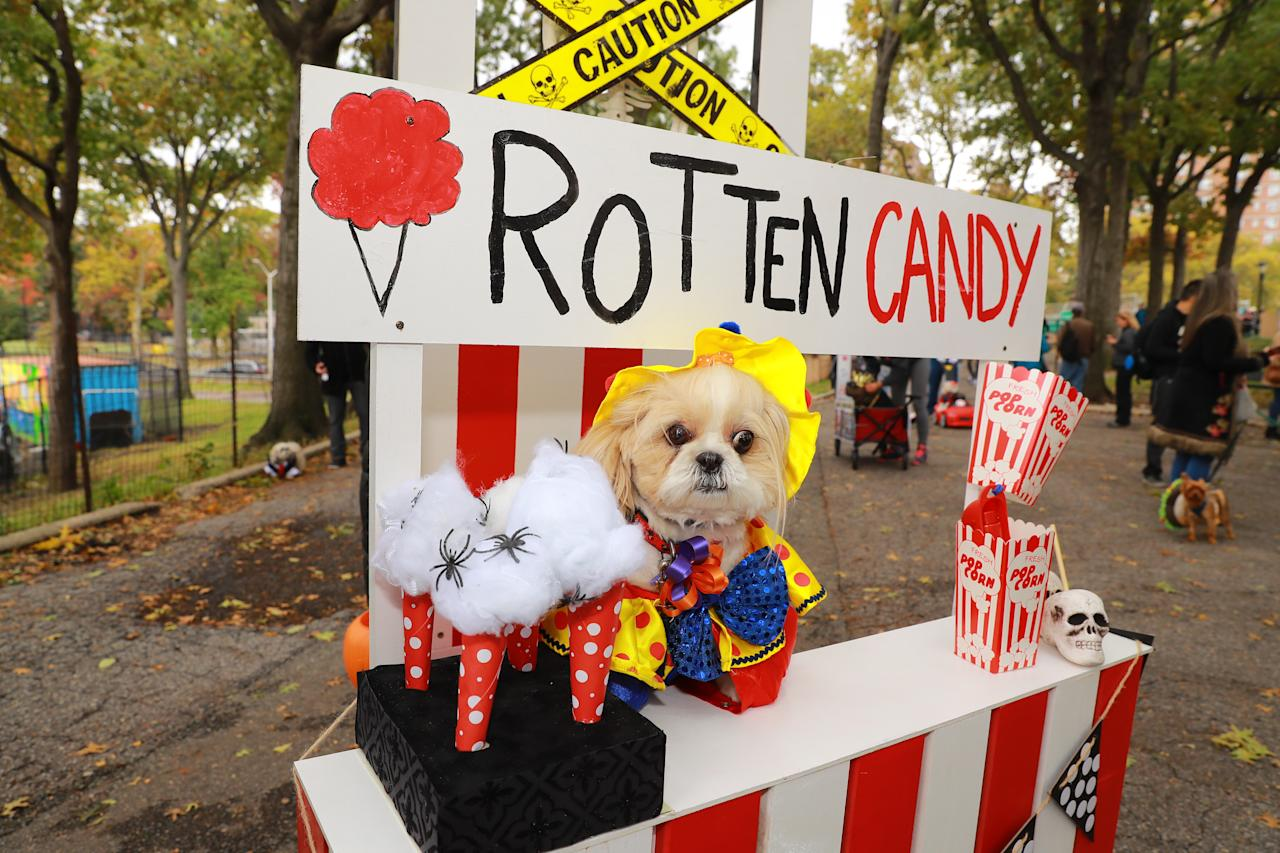 <p>A dog in costume as a evil vendor is seen during the 28th Annual Tompkins Square Halloween Dog Parade at East River Park Amphitheater in New York on Oct. 28, 2018. (Photo: Gordon Donovan/Yahoo News) </p>