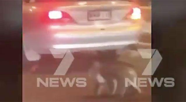 Highway drivers were shocked to see a koala trying to cross four lanes of traffic. Source: 7 News